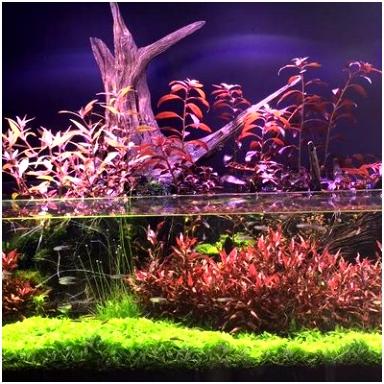 Nature Aquariums NAquariums