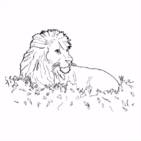 Leeuwen kleurplaten