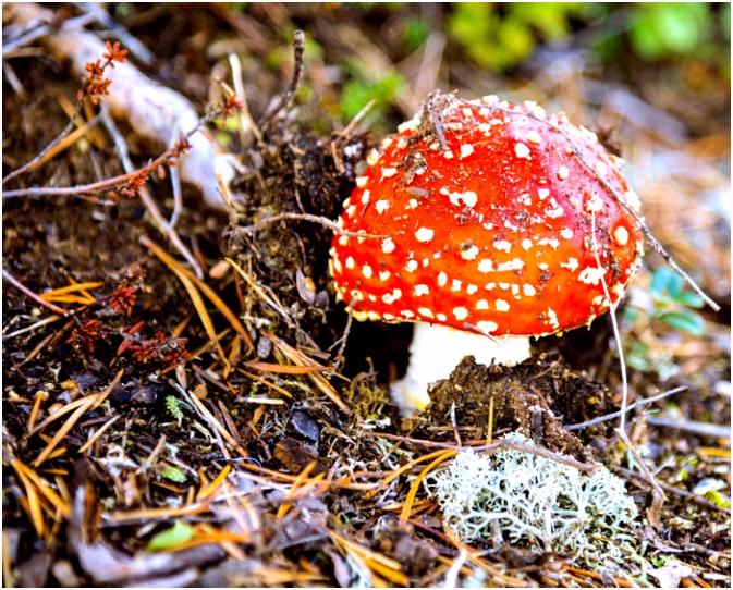 Giftige paddenstoelen nuttige tips