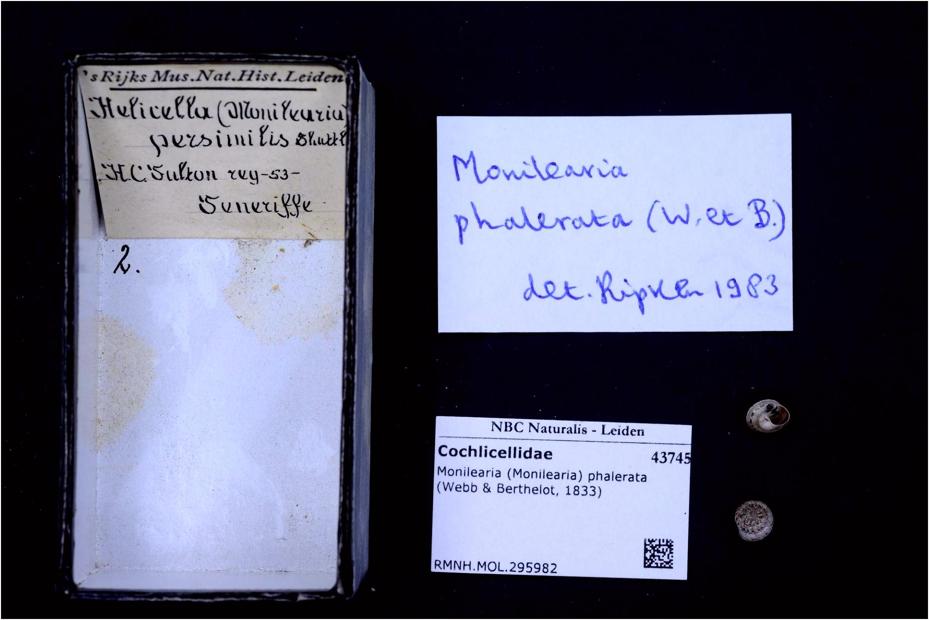 File Naturalis Biodiversity Center RMNH MOL Monilearia