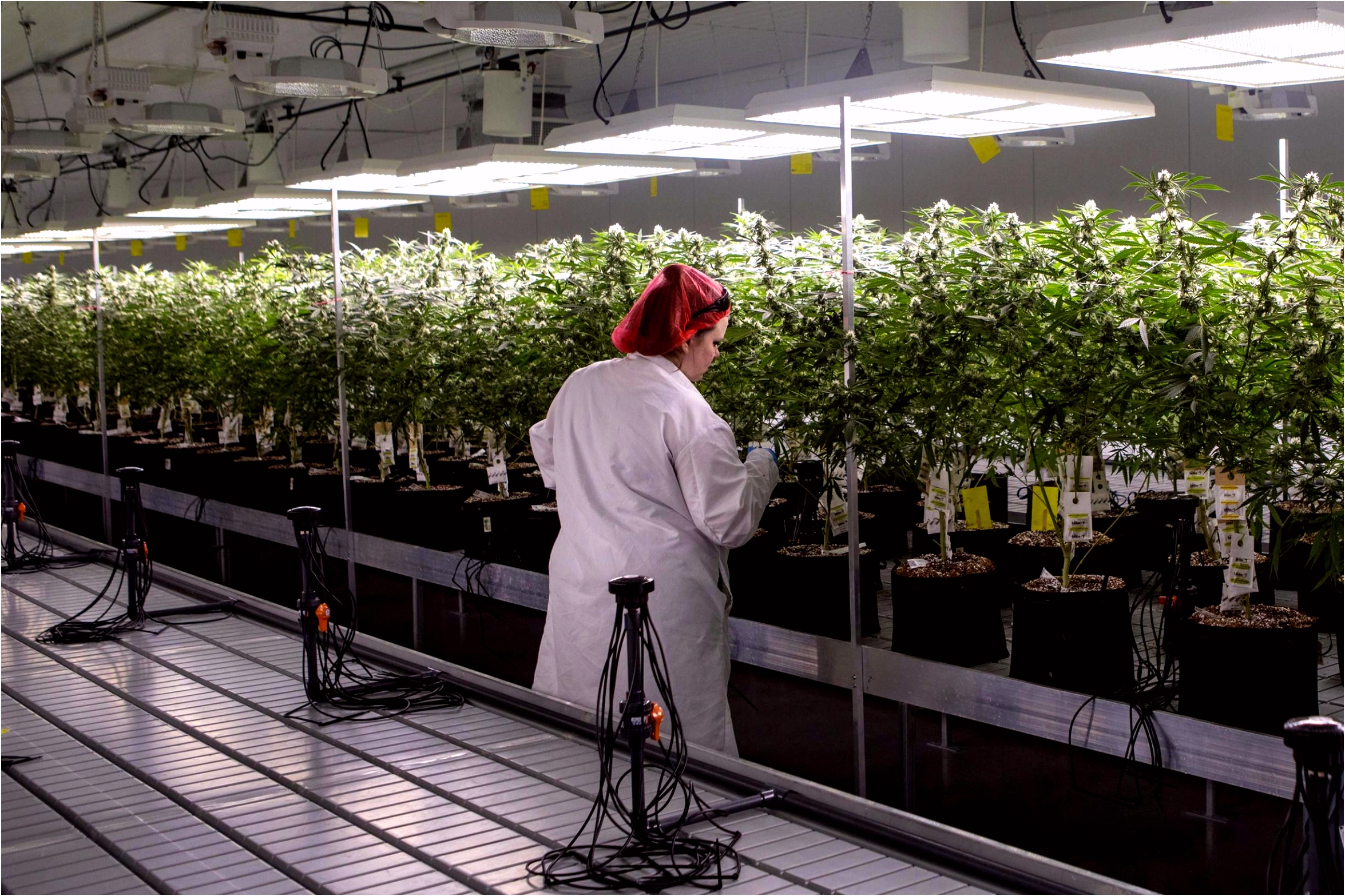 Mijn pati nten hebben recht op cannabis De Standaard