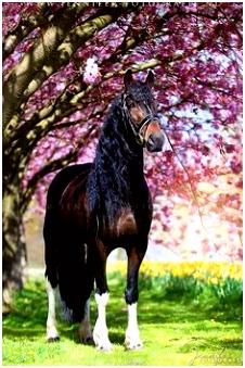 Over Paarden Ezels En Zebras 119 Beste Afbeeldingen Van Barock Pinto Baroque Equine X1te75ulh3 B6mtmhtgi6