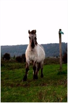 132 beste afbeeldingen van koniks Deviantart Wild horses en Wild