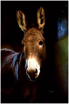 767 beste afbeeldingen van ezels in 2018 Horse Horses en Adorable