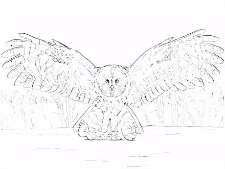 Grote grijze uil vliegt kleurplaat
