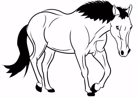 Paard kleurplaat