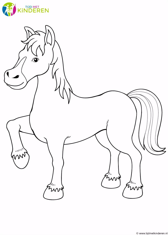 Paarden Kleurplaten Kleurplaten Dieren Nieuw Kleurplaten Dieren Paarden Kleurplaat Paard Q6ju56uvg5 Amfiu2hey0