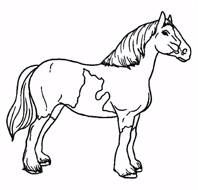 Paarden Kleurplaat Makkelijk ARCHIDEV