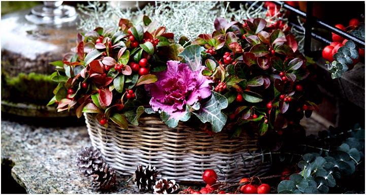 Sfeervolle theelichtjes Met Herfstbladeren Voor Informatie Over Sfeervol Terras Met Kleurrijke Herfstbloeiers X4in94jdq1 Uvtru0nejm