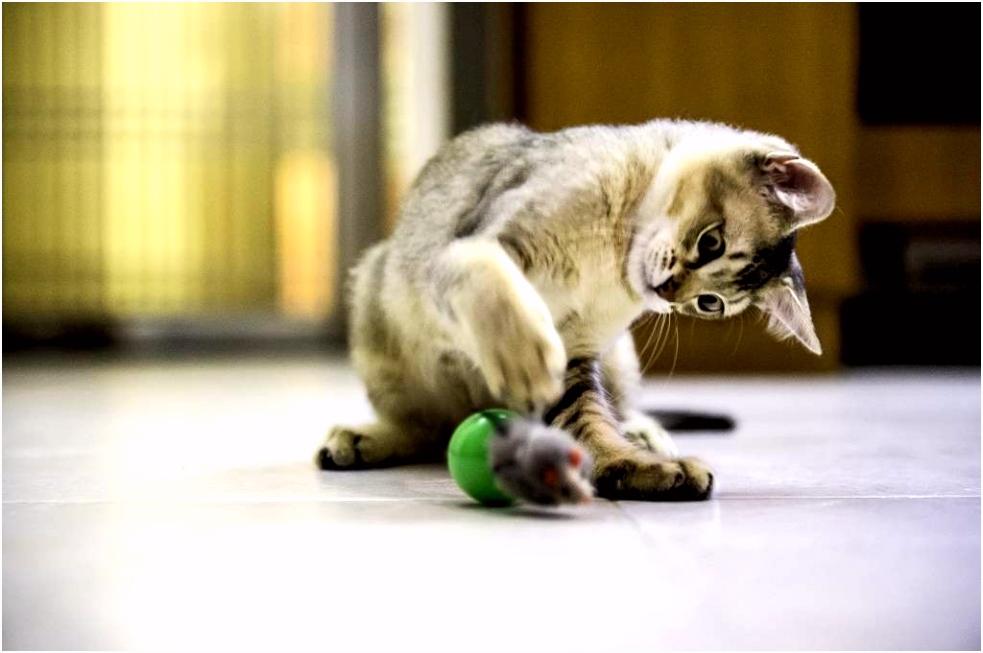 De meest actieve katten voor sportieve baasjes Max&Luna