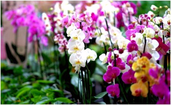 053 Orchidee n Hoeve Speciaal Busreizen Nederland Speciaal