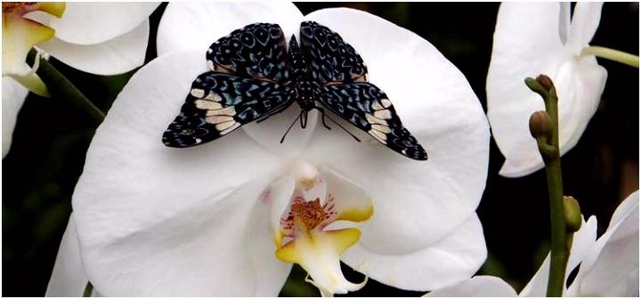 Verre werelden zo dichtbij Orchidee nhoeve met Vlindertuin Jack