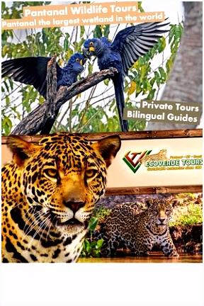 Pantanal Ecoverde Tours Cuiaba 2018 Alles wat u moet weten