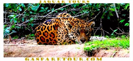 Gasparetour Pantanal Tours Cuiaba 2018 Alles wat u moet weten
