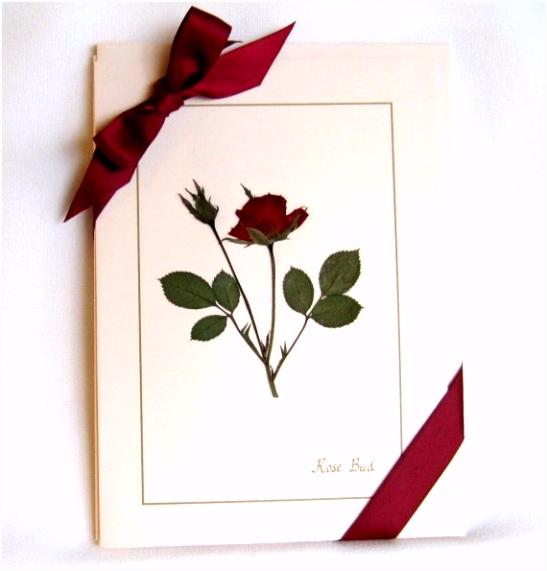 Rose kaart instellen gedroogd geperst bloemen op roze