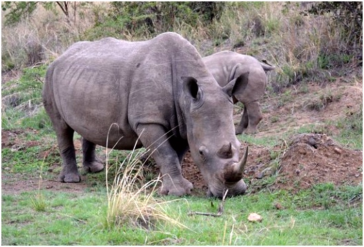 Wildebeest Picture of Sephiri Tours Greater Johannesburg