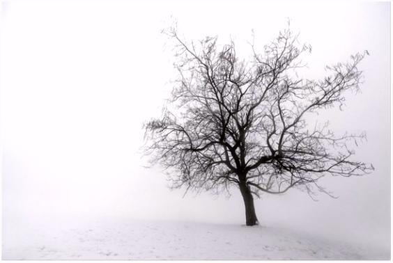 Poster Winter boom in de mist • Pixers We leven om te veranderen