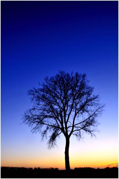 Winter boom tijdens zonsondergang van Sjoerd van der Wal op canvas