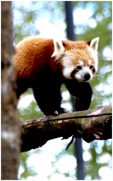 16 best zoo de Lille images on Pinterest