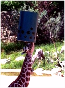244 Best Zoo enrichment ideas images in 2018
