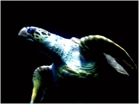 Best zoo in Europa Bild von Zoo Aquarium de Madrid Madrid