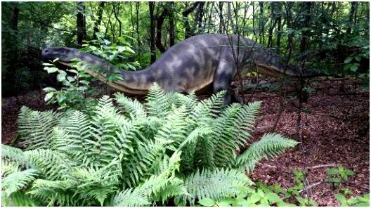 Dierenpark Amersfoort Dierenpark Amersfoort Picture Of Amersfoort Zoo Amersfoort Q5yz55clc0 C4pjv2it2u