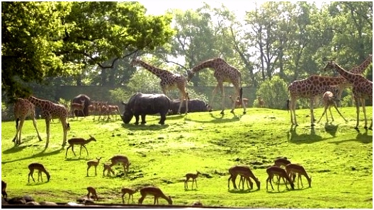 Savanne Picture of Wildlands Adventure Zoo Emmen Emmen TripAdvisor