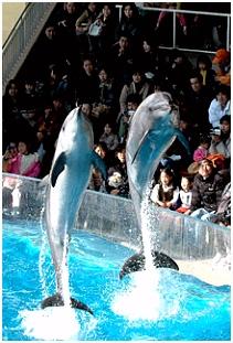 Delphinarium — Wikipédia