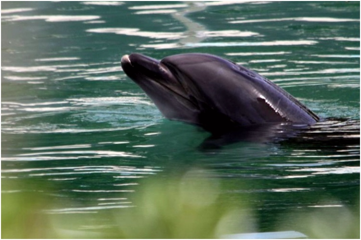 Dolphin Aquarium Netherlands