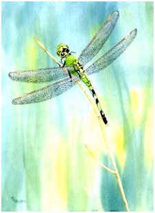 27 best Dragonflies images on Pinterest