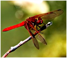 55 best DRAGONFLY S images on Pinterest