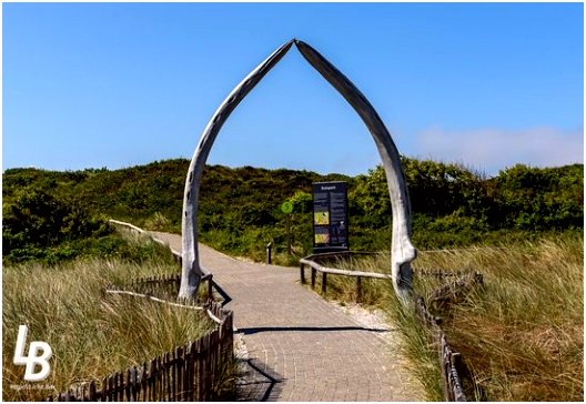 E are auf Texel 2016 de E are De Koog TripAdvisor