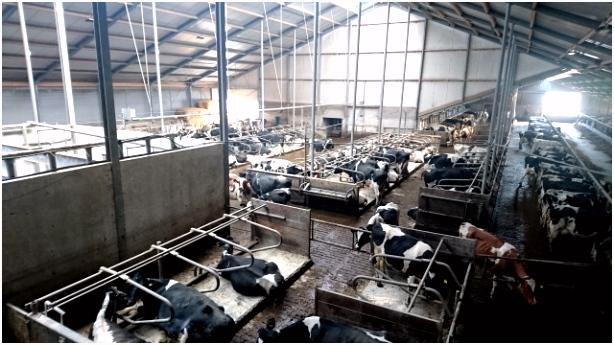 Kleurplaat Sinterklaas Zaanse Schans Landbouwgrond Te Koop Aangeboden Melkveebedrijf Burdaard Frl V0uv65ohg3 Q2ek66gna5