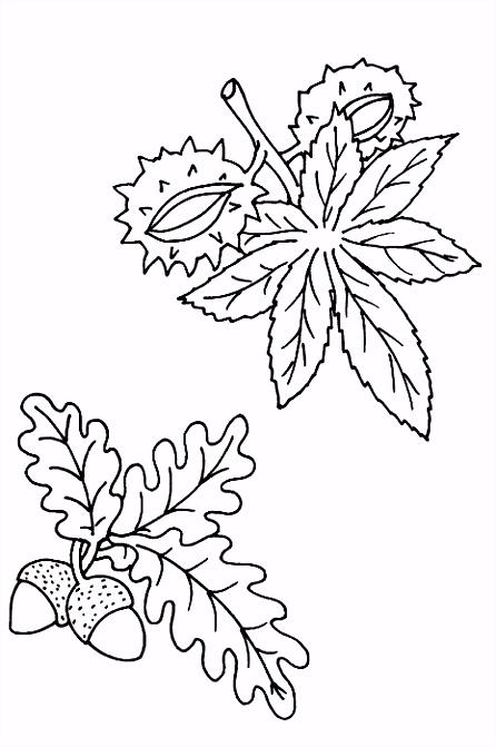 Bladeren Kleurplaat Animaatjes