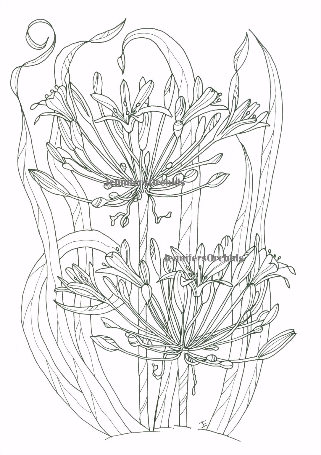Kleurplaten Bloemen Schilderijen Van orchidee N & andere Botanische Werken A4cf55oad2 Chtomunfj0