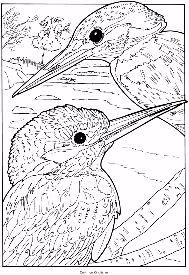 Creative Haven Exotic Birds Coloring Book mon Kingfisher