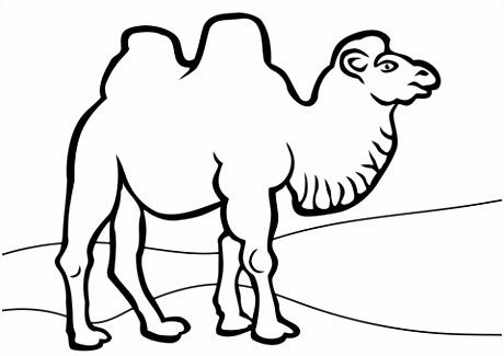 Bactrische kameel kleurplaat