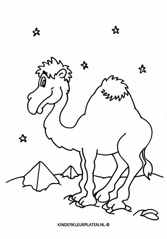 Kleurplaat dromedaris kameel piramide DIEREN