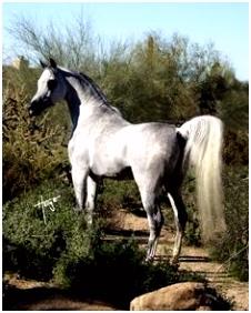 18 beste afbeeldingen van FNRS theorie Equestrian Horseback