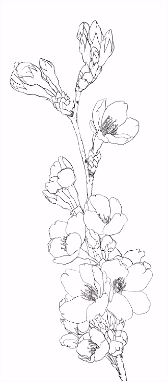 "Kleurplaat ""Bloem Plant Dier"" Colouring Picture ""Flower Animal"