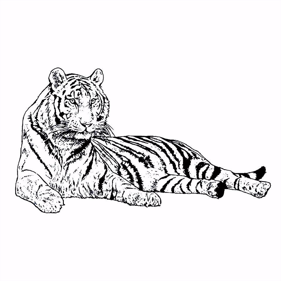 Leuk voor kids – Deze tijger rust uit