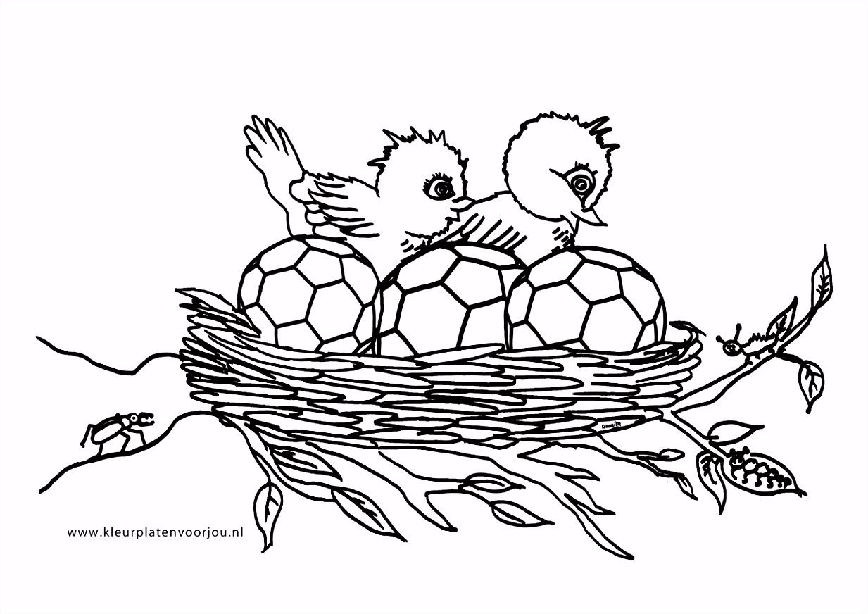 Nest Kleurplaat ARCHIDEV