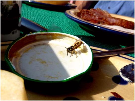 Wespen wespennesten en wespensteken Tallsay