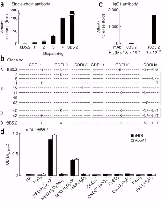 An abundant dysfunctional apolipoprotein A1 in human atheroma