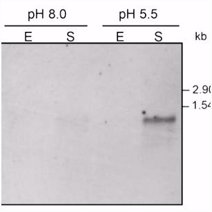 Daniela De Biase Ph D in Biochemistry