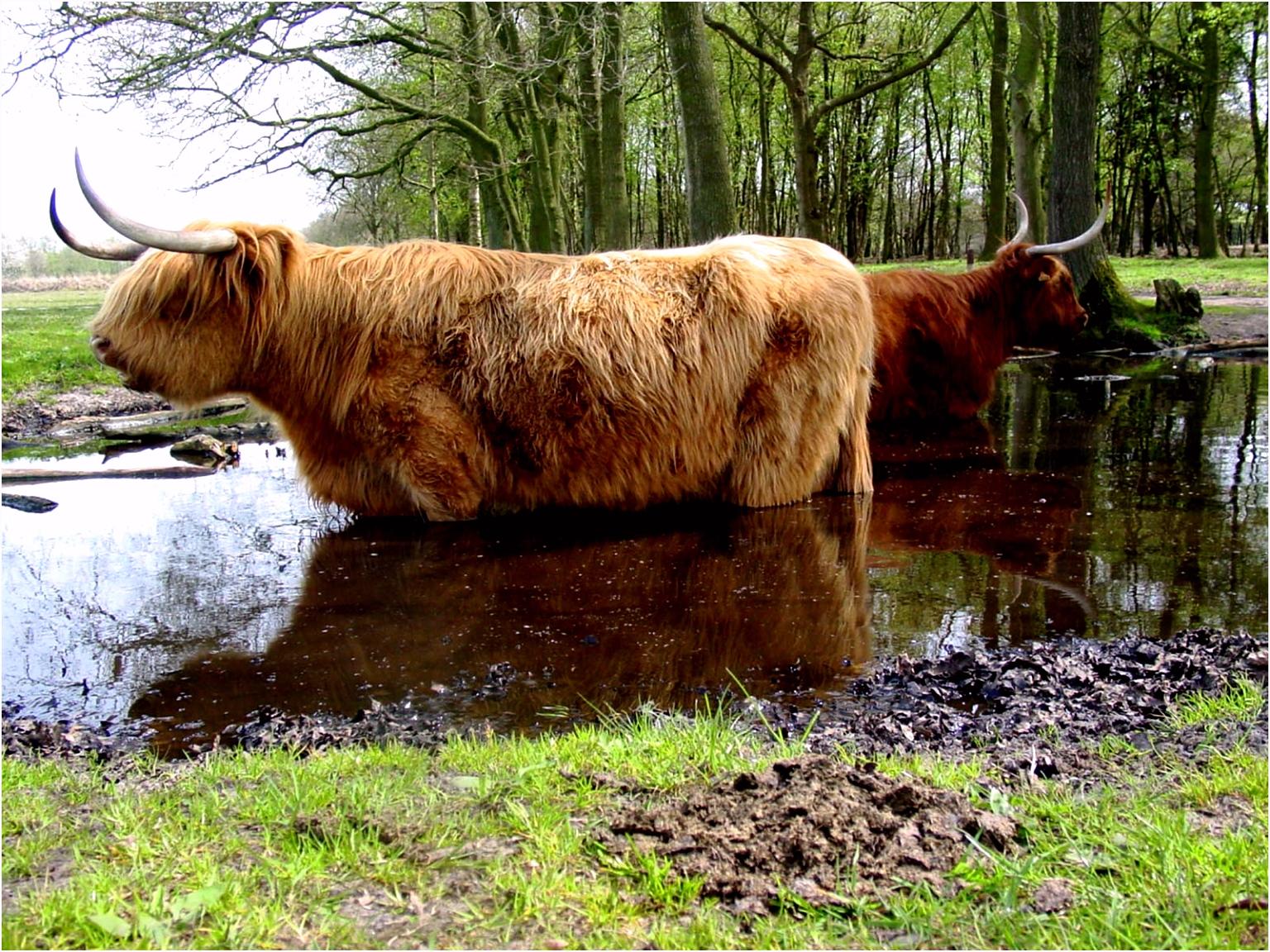 It Beekpronkje It Fryske Gea