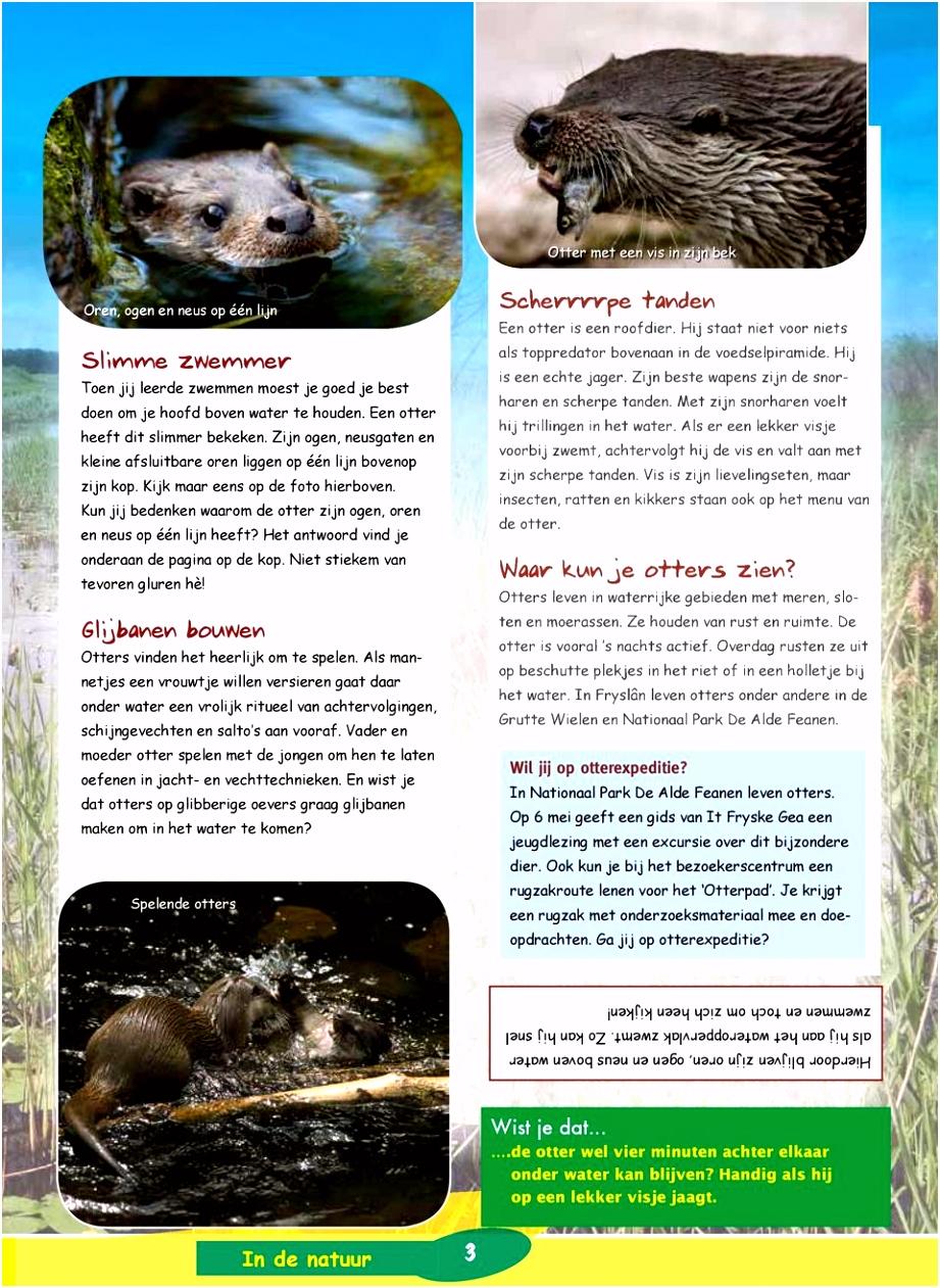 Kids Gea Maak een voedselpiramide Alles over de otter Kijk op