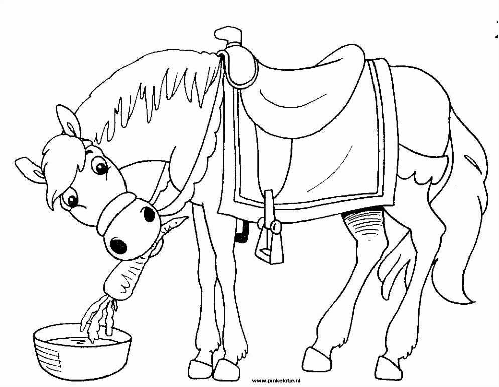Beste Van Paard Sinterklaas Kleurplaat