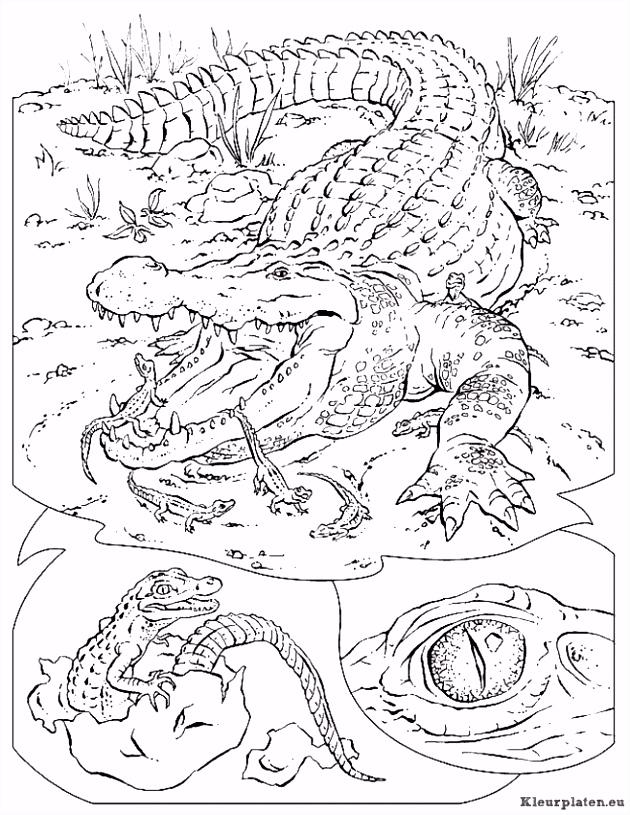 Krokodillen Kleurplaten