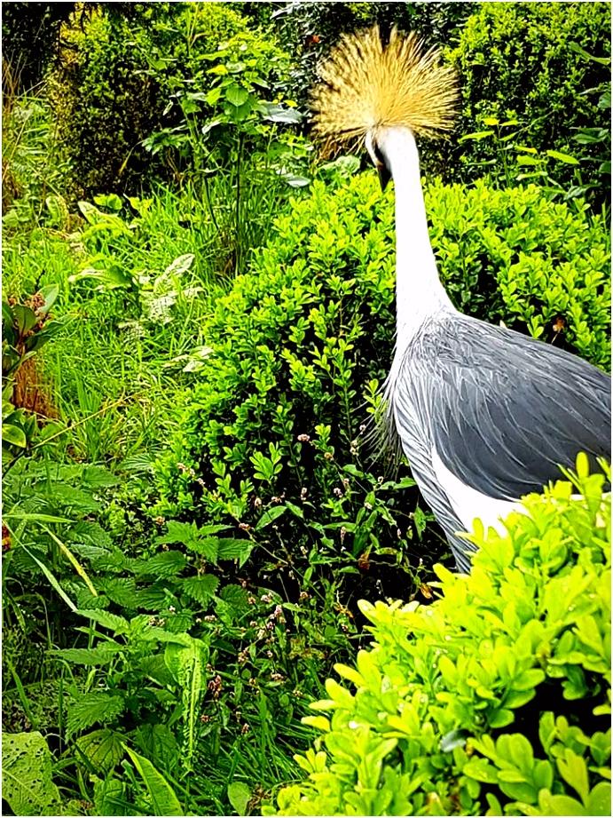 Vogelpark De Lorkeershoeve – Aga is DBG